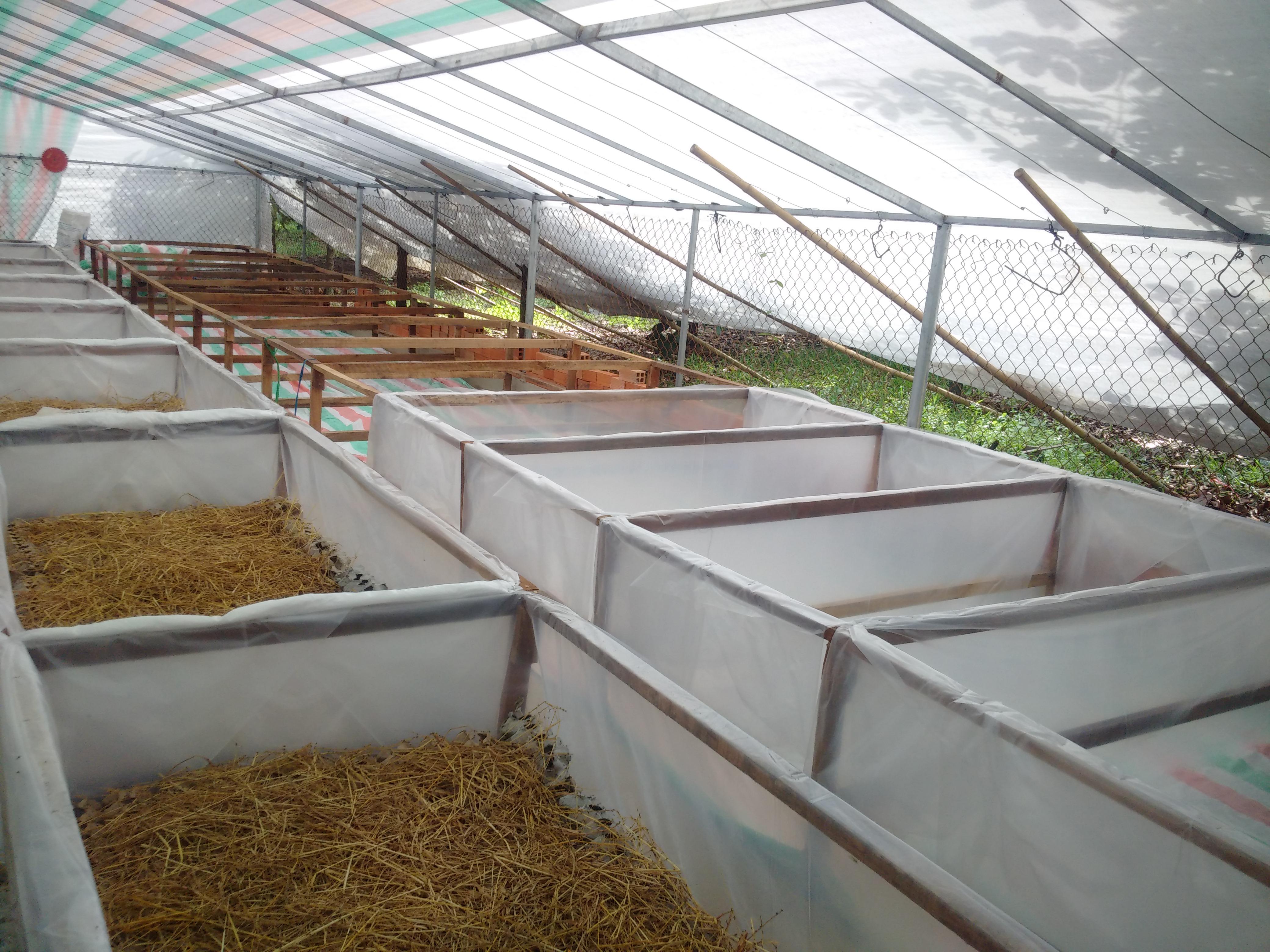 hình ảnh sản phẩm địa chỉ nơi bán cung cấp dế thịt đông lạnh đóng hộp giá sỉ lẻ tại đồng nai