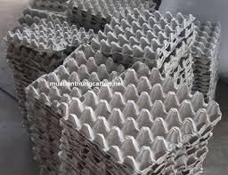 hình ảnh sản phẩm khay giấy vỉ giấy đựng trứng để nuôi dế dụng cụ nuôi dế